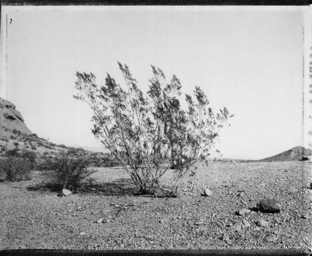 , 'Man behind creosote bush, Phoenix, 3/7/82,' 1982, Charles A. Hartman Fine Art