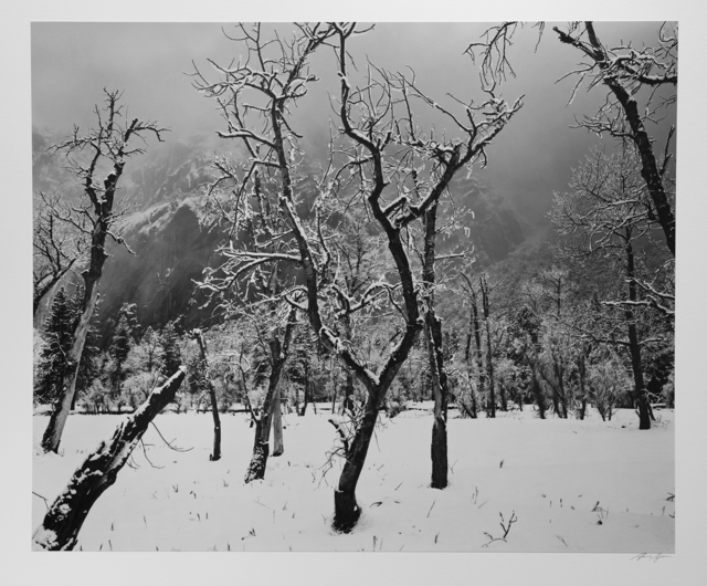 Ansel Adams, 'Trees, Meadow, Snow, Yosemite National Park', ca. 1965, Photography West Gallery