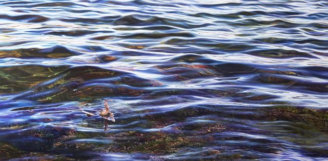 , 'Crane #41 (San Francisco, CA),' 2018, Louis K. Meisel Gallery