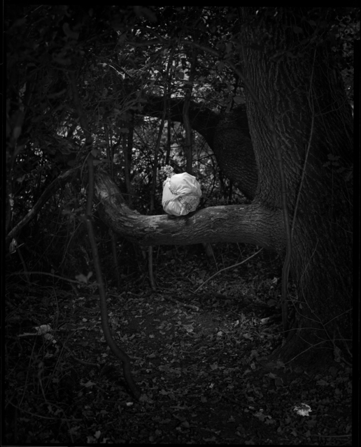 , 'Rituals (Forest), Fig.5,' 2017, Charlie Smith London