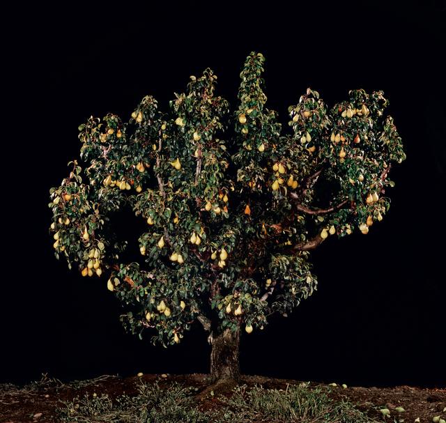 , 'Agas (Pear),' 2011, Meislin Projects