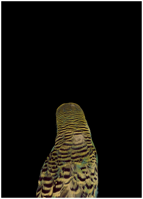 , 'Bad Bird #13,' , .M Contemporary