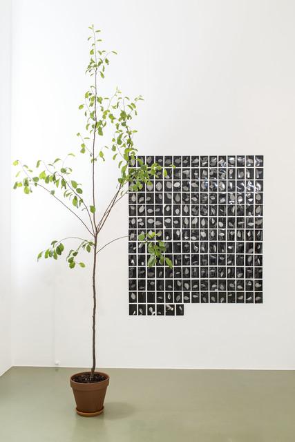, 'Blätter,' 2017, Galerie Crone
