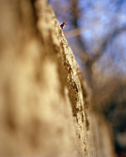 , 'Horse On Ridge,' 2006, InLiquid