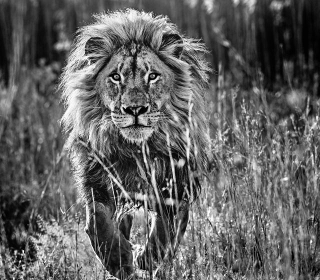 David Yarrow, 'The Full Nine Yards ', 2014, Photography, Archival Pigment Print, Maddox Gallery