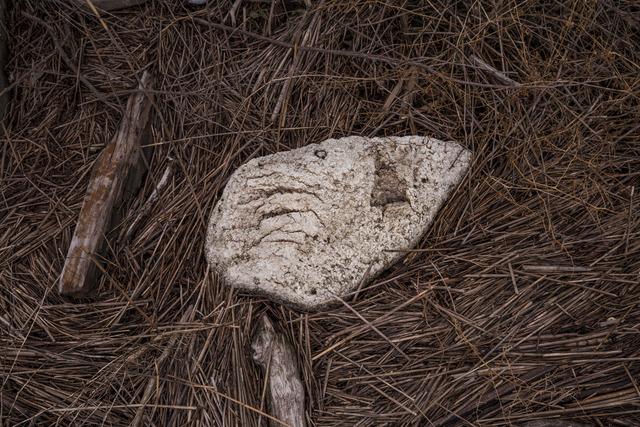 , 'Styrofoam on Dead Reeds,' 2017, Soho Photo Gallery