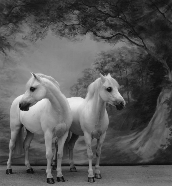 Sheila Rock, 'Horse #57', ElliottHalls