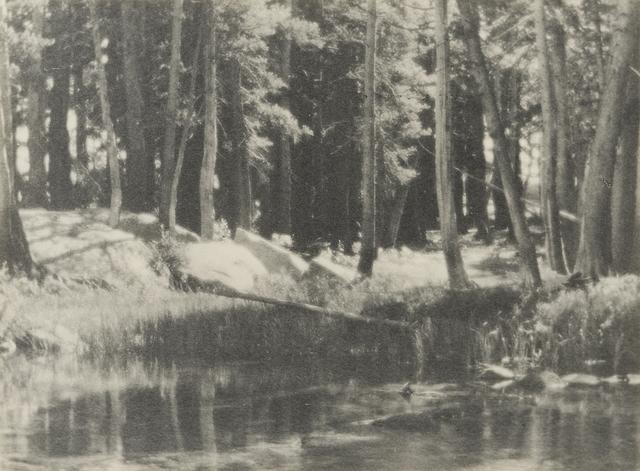, 'A Grove of Tamarack Pine,' 1921, The Ansel Adams Gallery