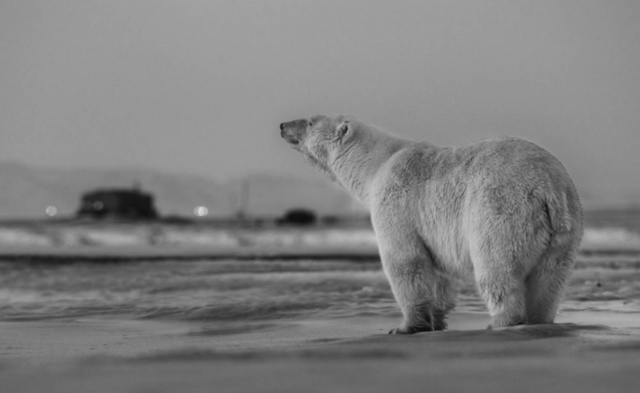 David Yarrow, 'My Place or Yours?', Art Angels