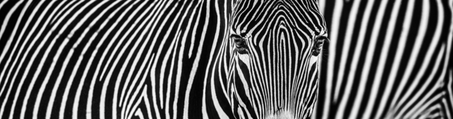 David Yarrow, 'Parallel Lines ', 2018, Maddox Gallery