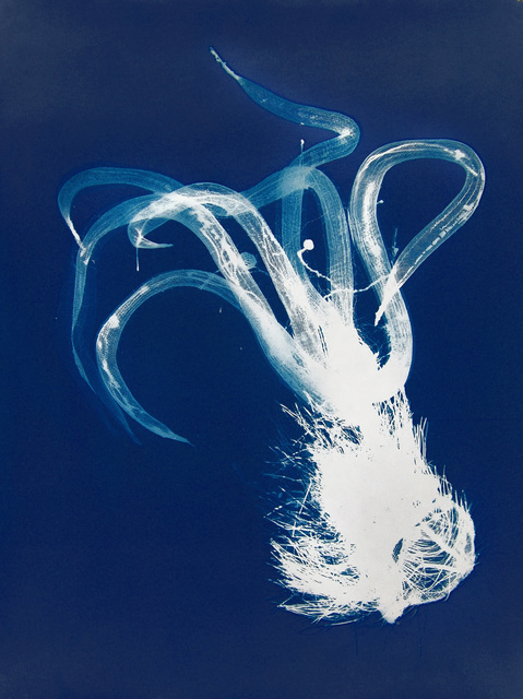 Nancy Wilson-Pajic, 'Divas: Coiffe (headdress)', 2004, Photography, Cyanotype photogram, Robert Koch Gallery