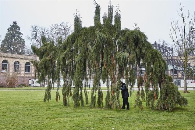 , 'Tree lumper, Karlsruhe,' 2017, Galeria Filomena Soares