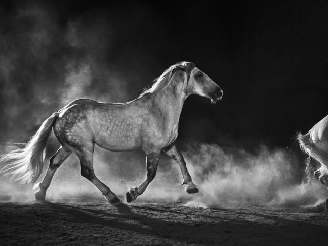 , 'Fetlock,' 2019, Tolarno Galleries