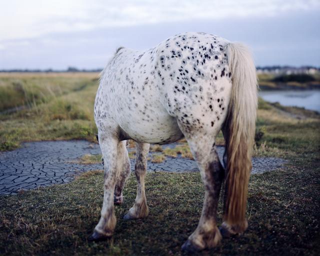 , 'Horse, New Forest,' 2009, Open Doors Gallery