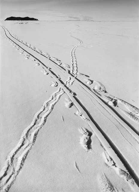 , 'ADELIE PENGUIN TRACKS AND SLEDGE TRACK CROSSING, 8 DECEMBER 1911,' 1911, Huxley-Parlour