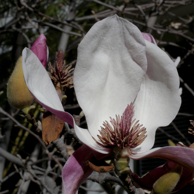 , 'TDTDC 38 (Magnolia Flower),' 2009, photo-eye Gallery
