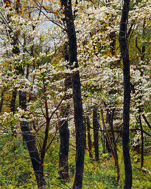 , 'Thicket No. 41: Spring Dogwood,' 2015, Duane Reed Gallery