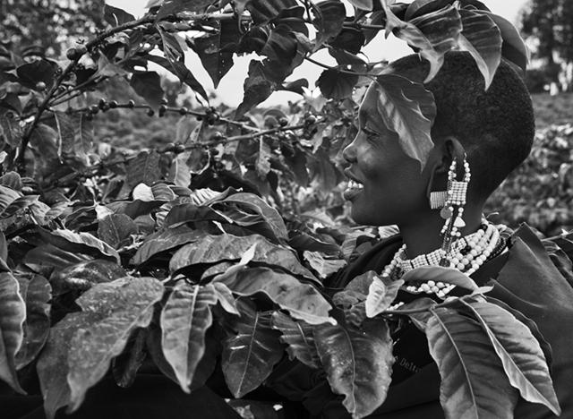, 'Un raccoglitore di caffè nella piantagione di Shangri La. Rift Valley, pendici del cratere Ngorongoro, Tanzania,' 2014, Fondazione Bevilacqua la Masa