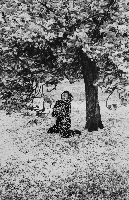 , 'Cerisier en Fleurs,' 1983, Afterimage Gallery