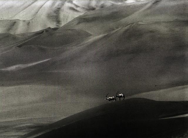 , 'Orix - Namibia,' 2005, Galeria Tempo