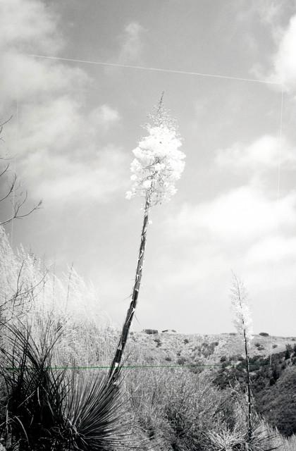 , 'Achromatic,' 2017, Tappan