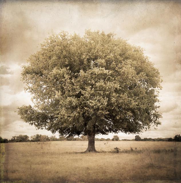 , 'Hackberry Tree, Plum Creek, Texas,' , Etherton Gallery