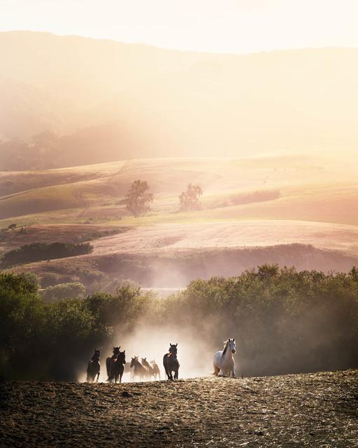 David Drebin, 'Morning Glory', 2014, Photography, C-Print, CAMERA WORK