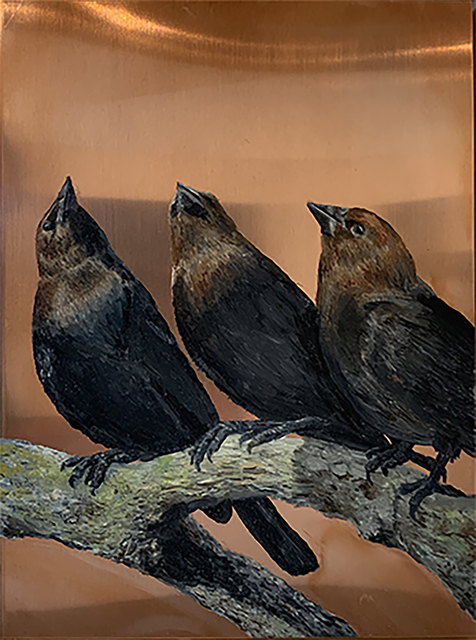 Darren Johnson, 'Three Brown-headed cowbirds', 2018, Painting, Oil on copper, Priscilla Fowler Fine Art