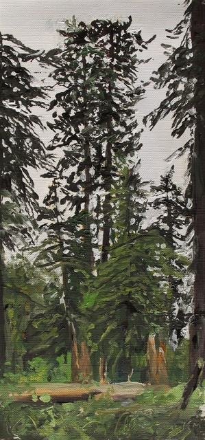 Kevin Muente, 'Rainforest, Quinault Olympic National Park', Marta Hewett Gallery
