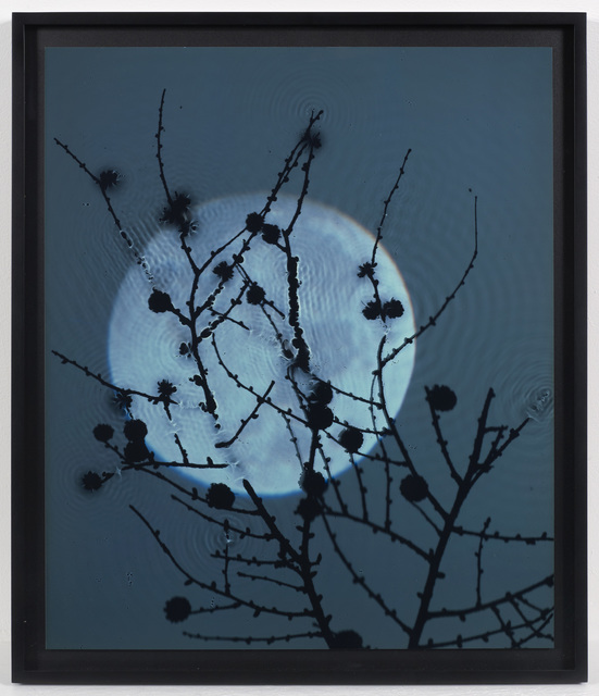 , 'Susan Derges Full Moon - Larch  ,' 2003, Purdy Hicks Gallery