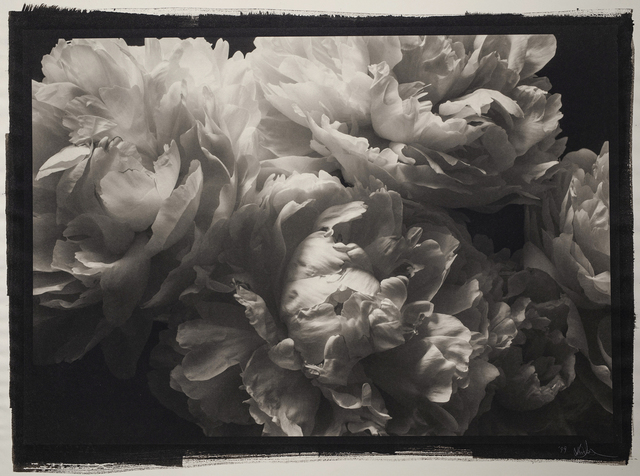 , 'Still Life #799,' 1999, Photography West Gallery