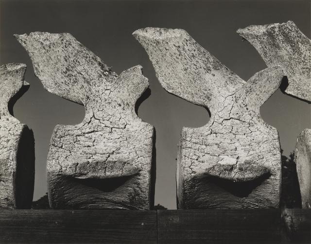 , 'Whale Vertebra,' 1934, San Francisco Museum of Modern Art (SFMOMA)