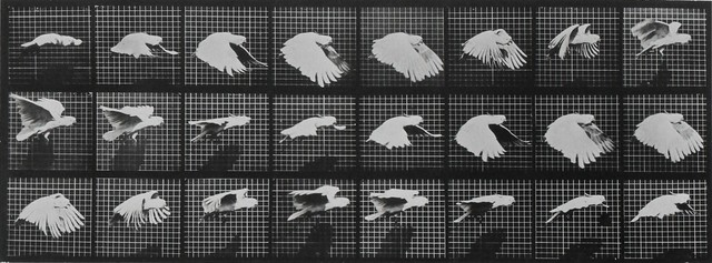 , 'Animal Locomotion: Plate 759 (Cockatoo in Flight),' 1887, Huxley-Parlour