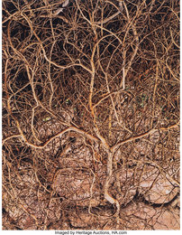 Untitled (Branches) from Glen Canyon Series