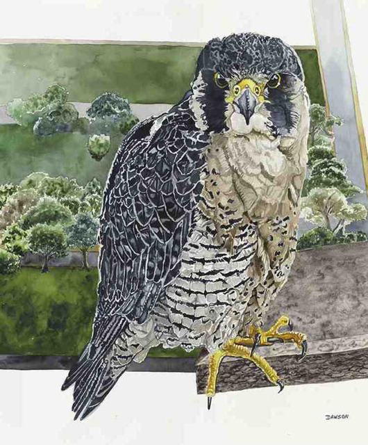 , 'Tower Girl: Peregrine Falcon,' 2018, Wally Workman Gallery
