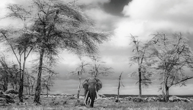 David Yarrow, 'The Fairytale', 2017, Maddox Gallery