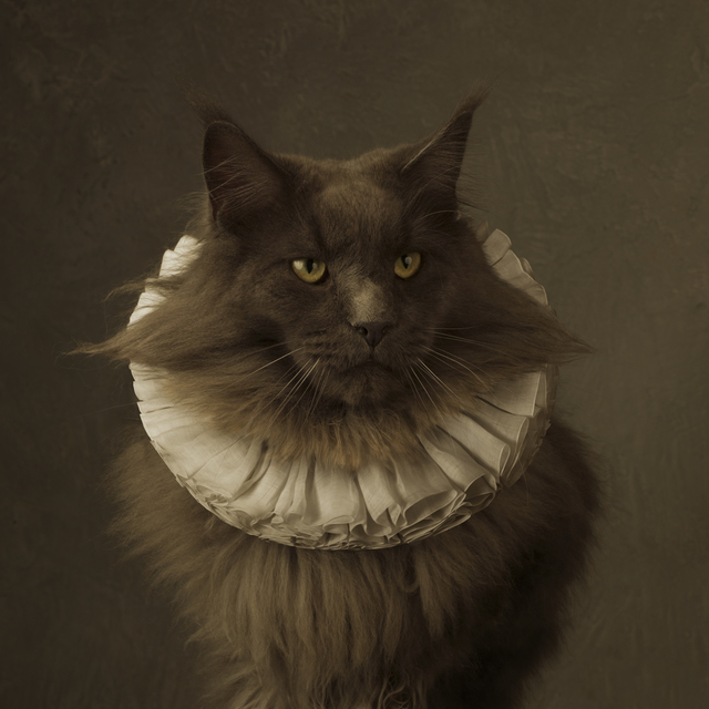 , 'Cat with White Collar V,' 2014, SmithDavidson Gallery