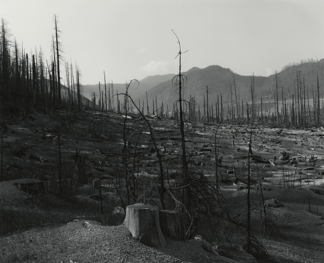 , 'Old Clearcut in Clearwater Creek Valley,' 1981, Lee Gallery