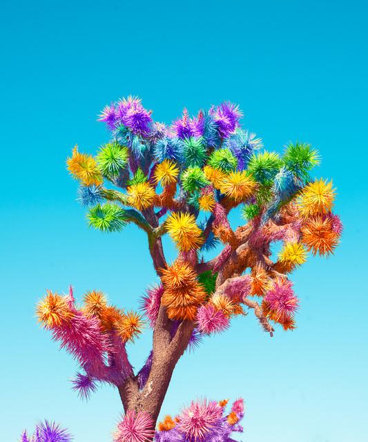 Ramzy Masri, 'Joshua Tree', ArtStar