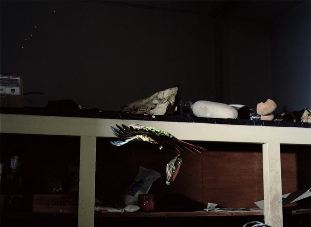 , 'Tortoise and strange parrot,' 2011, Fonseca Macedo