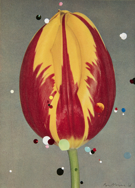 , 'No. 5 #2 Single Early Tulip Prince Carnival, serie Bloemen,' 2016, Galeria Leme