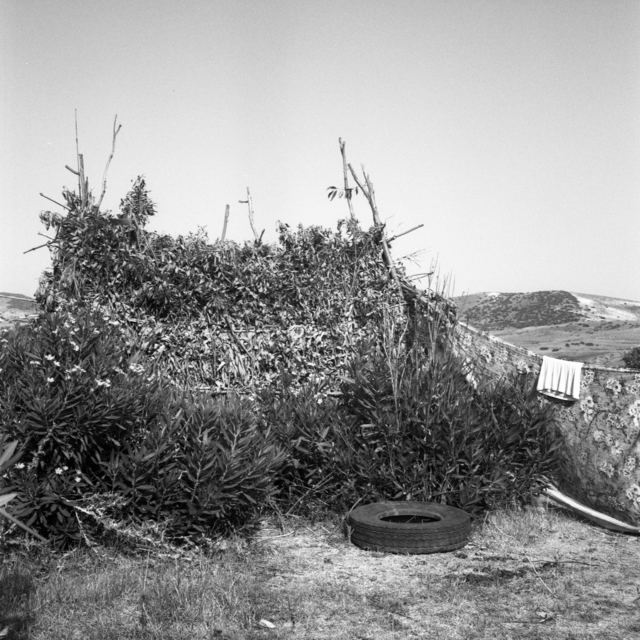 , 'Cabane de Lauriers (Oleander Summer Shed), Sidi Mghait, Fig. 1,' 2009, Pace/MacGill Gallery