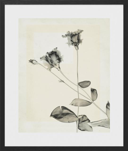Thomas Ruff, 'flower.s.23', 2018, Photography, C-print, vintage, Mai 36 Galerie