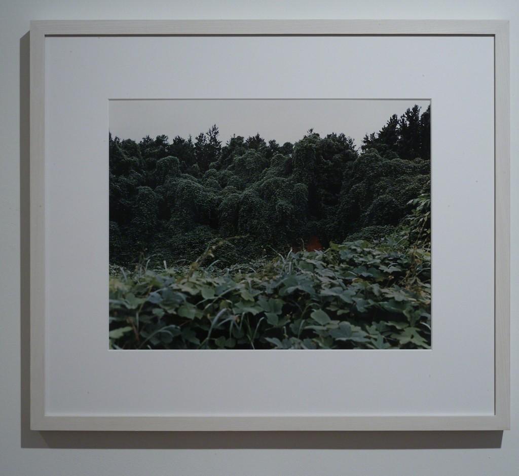 Kudzu with Red Soil Bank—Near Akron,Alabama