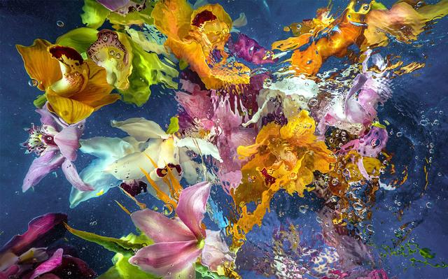Allan Forsyth, 'Aqua Flora 6', 2016, CHROMA GALLERY