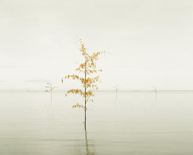 , 'Orange Leaves, Ariake Sea, Kyushu, Japan,' 2010, CYNTHIA-REEVES
