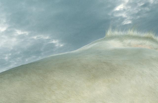 Leon Steele, 'Pelage Dune Grass', 2002, Photography, Chromogenic Print, Wren London