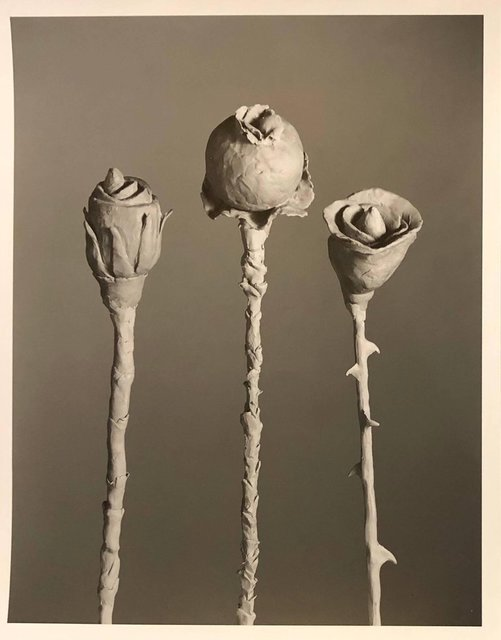 Jo Ann Callis, 'After Blossfeldt #1, Vintage Silver Gelatin Signed Photograph', 20th Century, Lions Gallery
