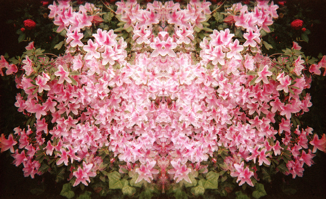 Ellen Stagg, 'Flowers of Pink', 2015, Parlor Gallery
