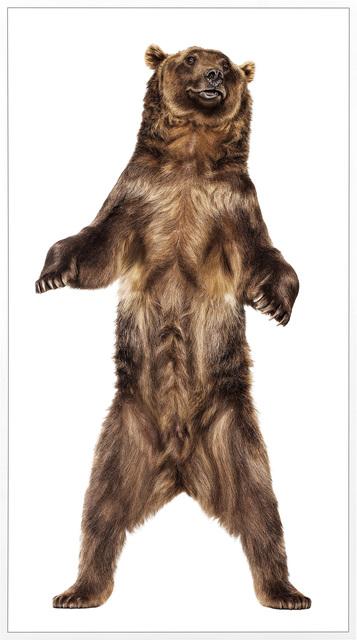 Andrew Zuckerman, 'Grizzly Bear 26', 2009, Phillips